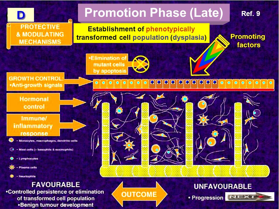 Promotion Phase (Late)