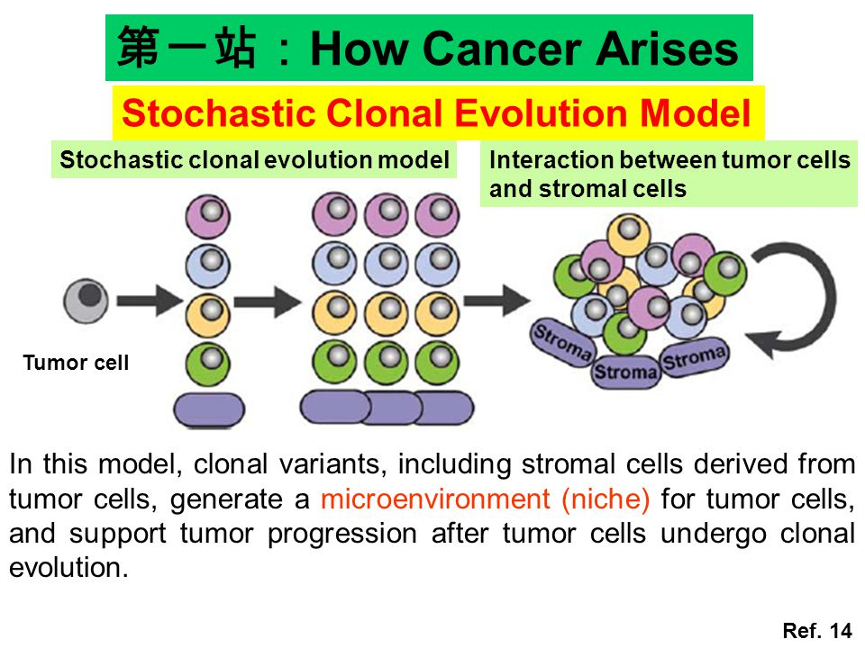 第一站:How Cancer Arises Stochastic Clonal Evolution Model