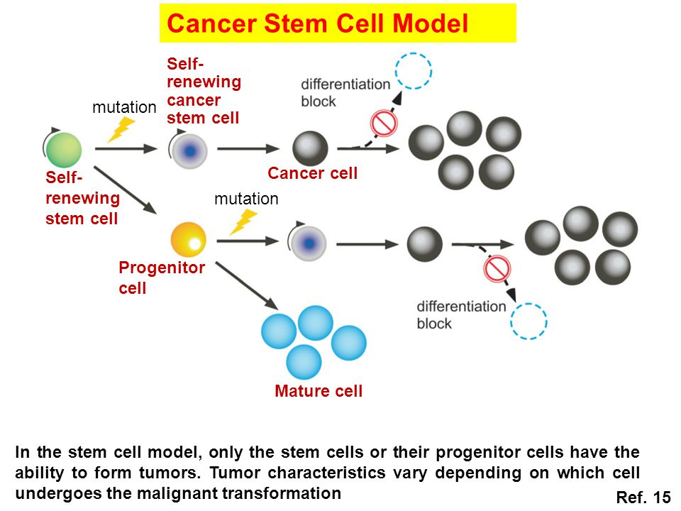 Cancer Stem Cell Model cancer stem cell mutation Cancer cell Self-
