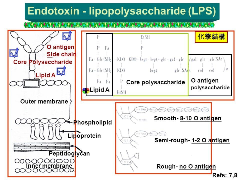 Endotoxin - lipopolysaccharide (LPS)