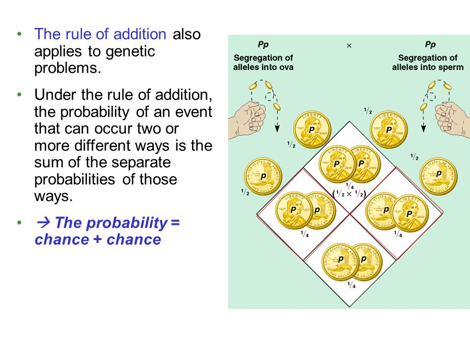 The rule of addition also applies to genetic problems.