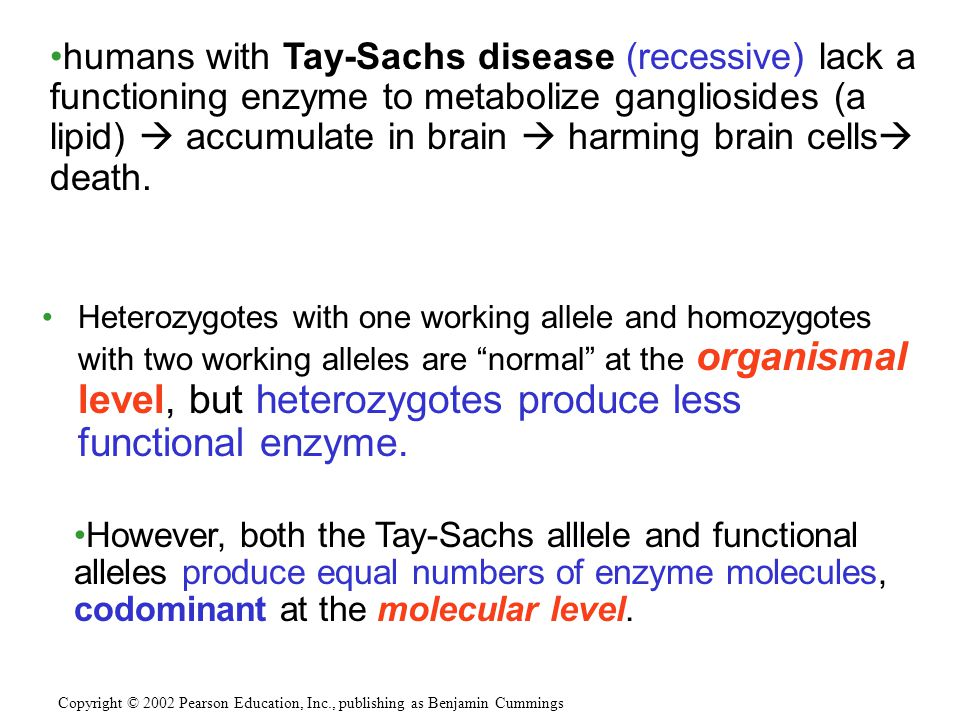 humans with Tay-Sachs disease (recessive) lack a functioning enzyme to metabolize gangliosides (a lipid)  accumulate in brain  harming brain cells death.