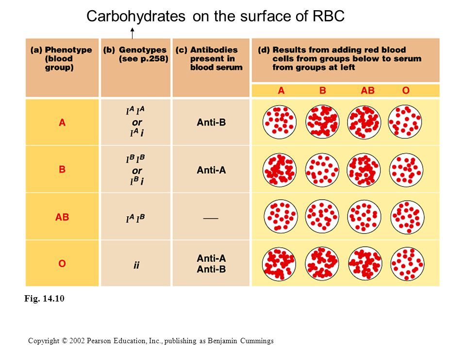 Carbohydrates on the surface of RBC