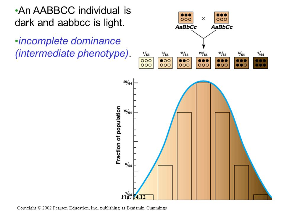 An AABBCC individual is dark and aabbcc is light.