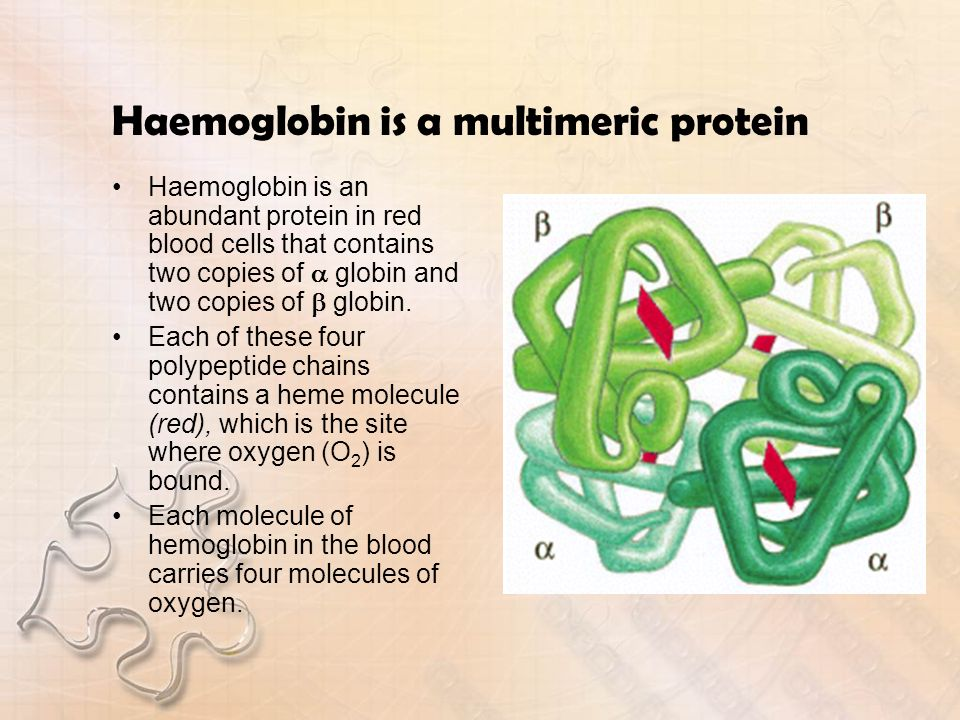 Haemoglobin is a multimeric protein