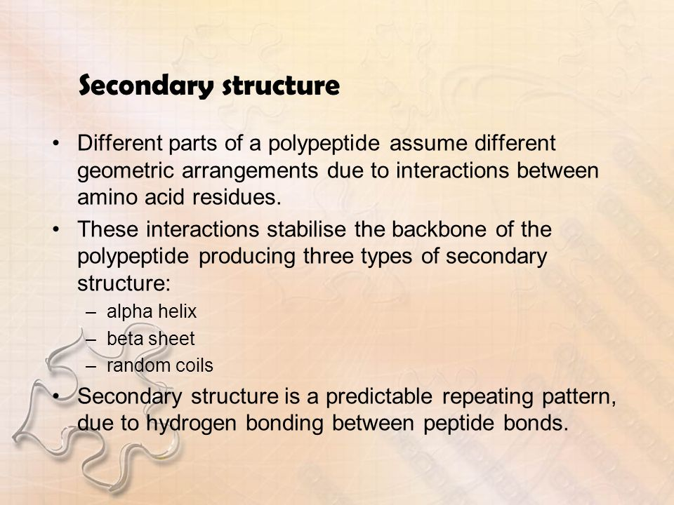 Secondary structure Different parts of a polypeptide assume different geometric arrangements due to interactions between amino acid residues.