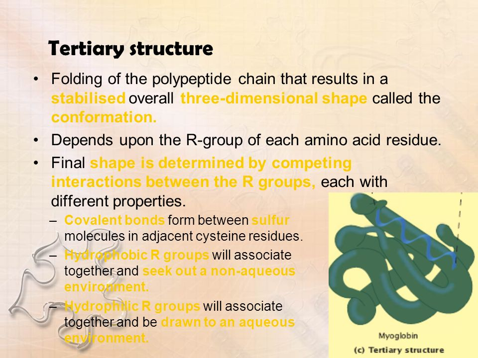 Tertiary structureFolding of the polypeptide chain that results in a stabilised overall three-dimensional shape called the conformation.