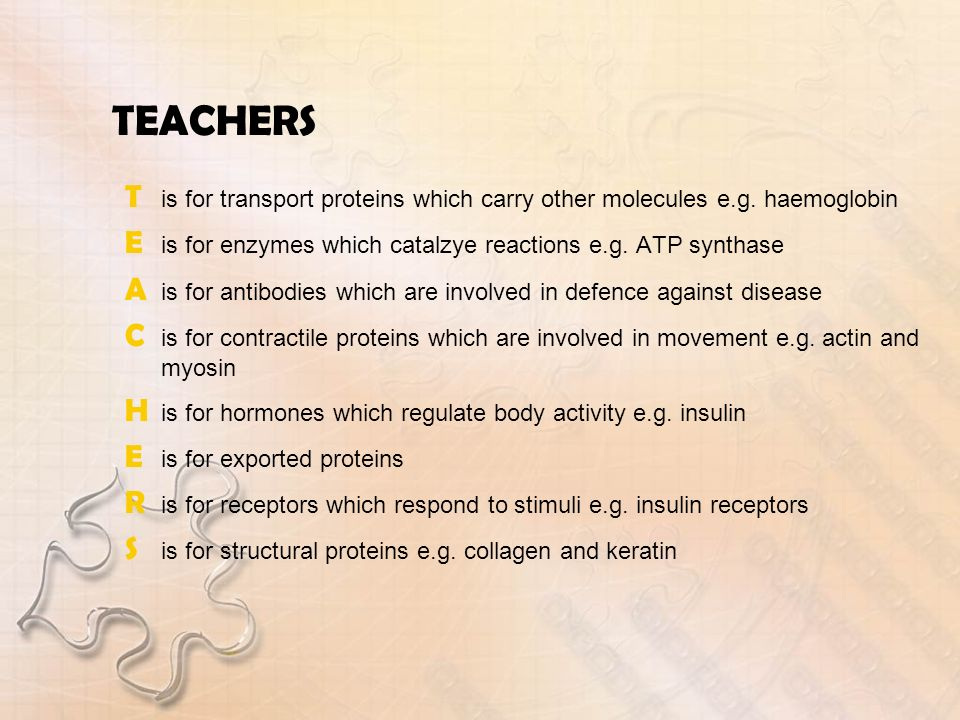 TEACHERS T is for transport proteins which carry other molecules e.g. haemoglobin. E is for enzymes which catalzye reactions e.g. ATP synthase.
