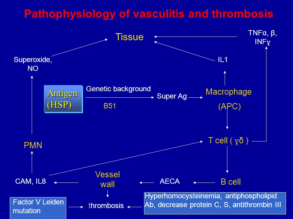 Pathophysiology of vasculitis and thrombosis