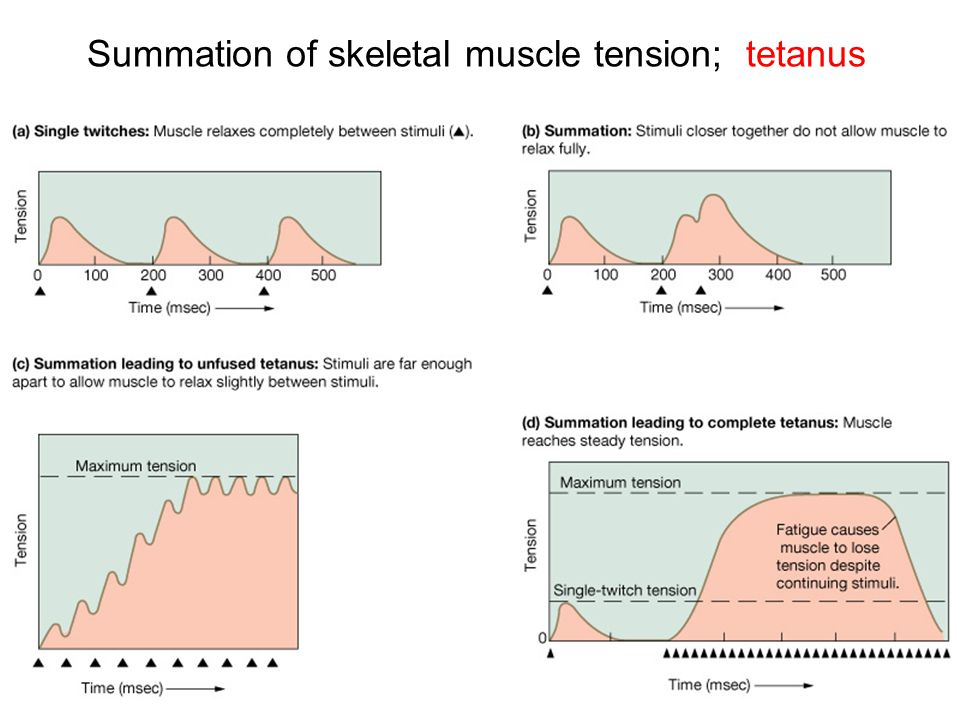 Summation of skeletal muscle tension; tetanus