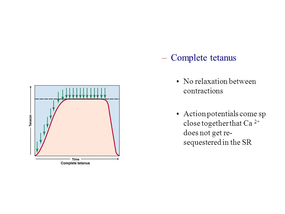 Complete tetanus No relaxation between contractions