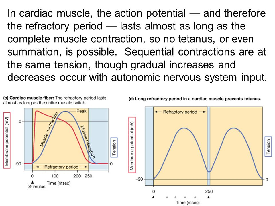 In cardiac muscle, the action potential — and therefore the refractory period — lasts almost as long as the complete muscle contraction, so no tetanus, or even summation, is possible.