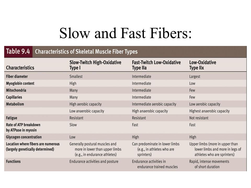 Slow and Fast Fibers: