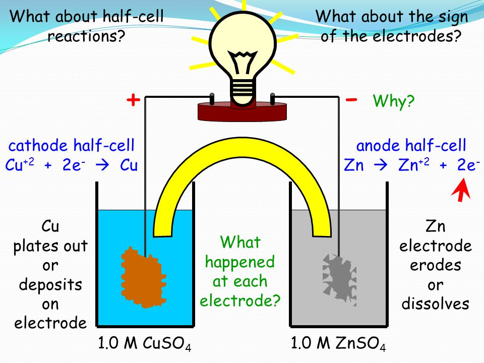 - + What about half-cell reactions