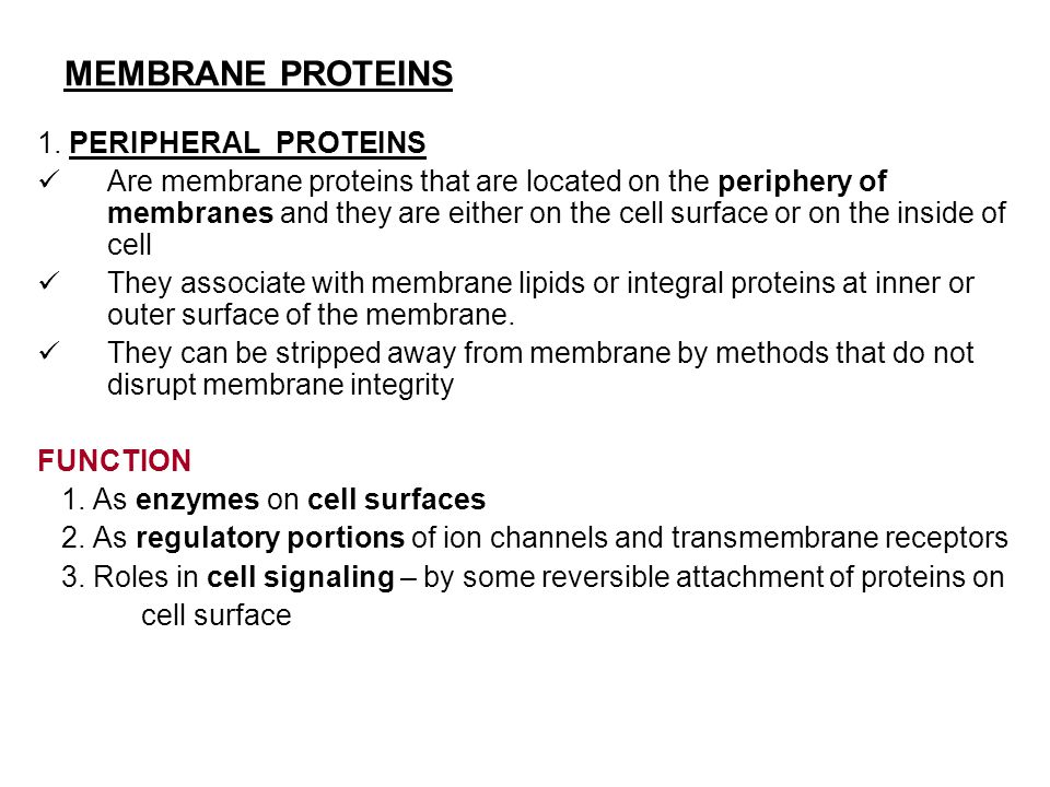 MEMBRANE PROTEINS 1. PERIPHERAL PROTEINS