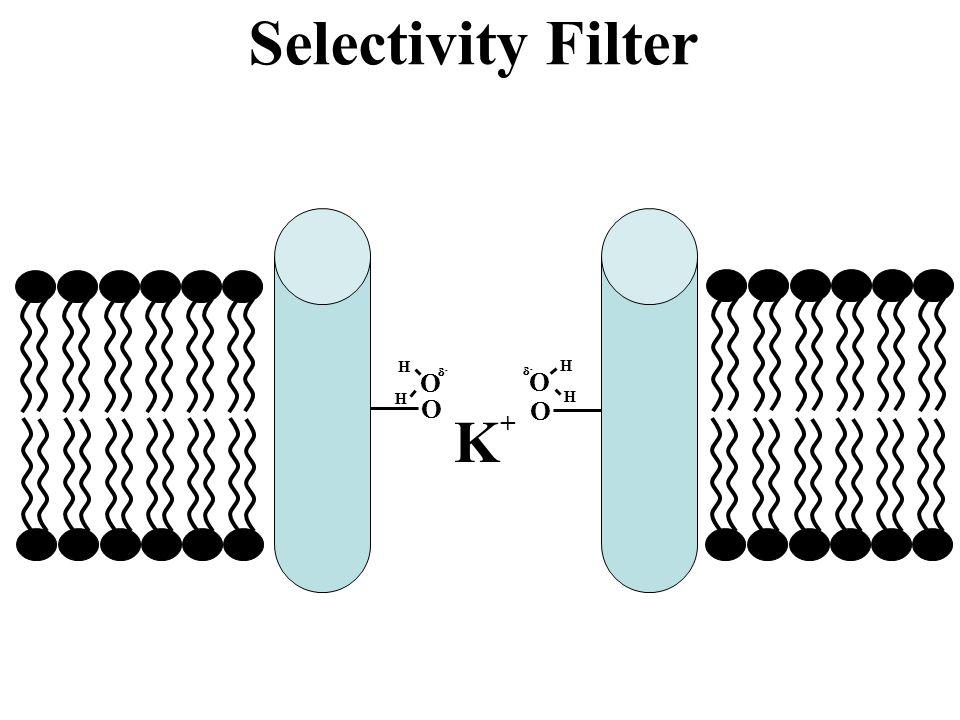 Selectivity Filter O H - O H - O O K+
