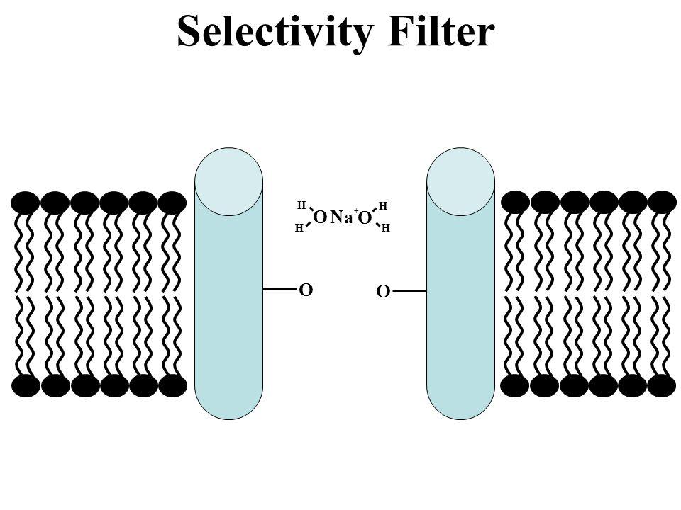 Selectivity Filter Na+ O H O O