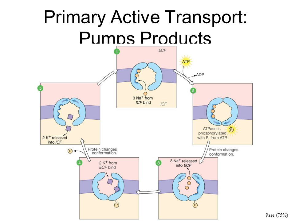 Primary Active Transport: Pumps Products