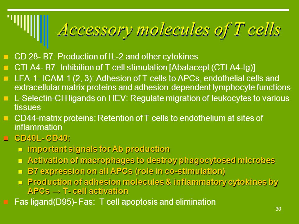 Accessory molecules of T cells