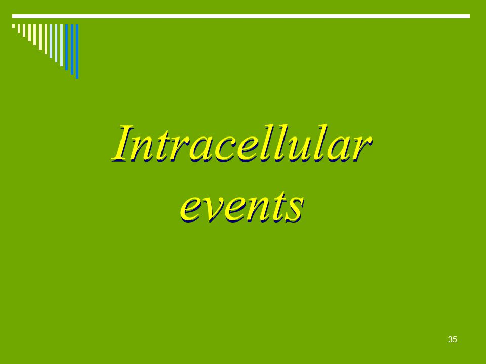 Intracellular events