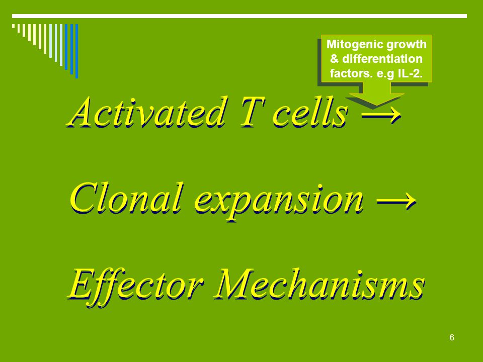 Activated T cells → Clonal expansion → Effector Mechanisms