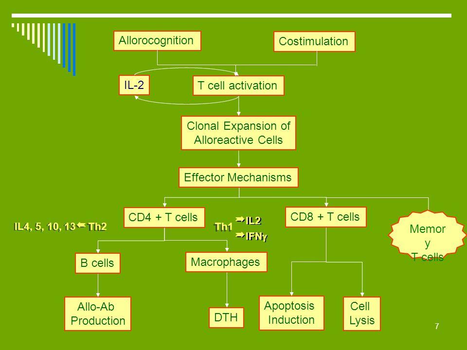 IL2 Allorocognition Costimulation IL-2 T cell activation
