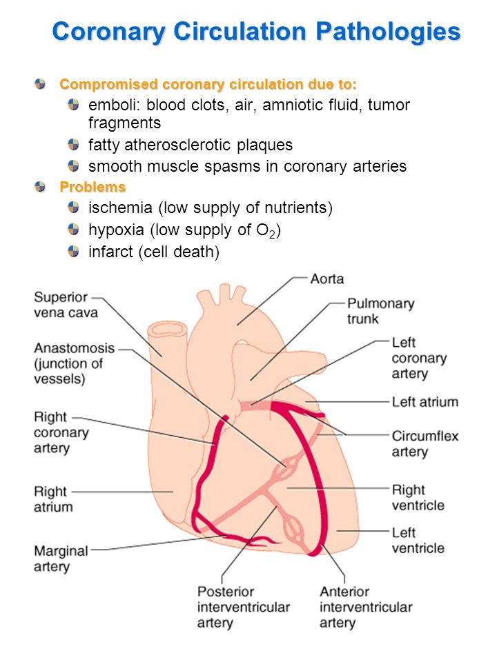 Coronary Circulation Pathologies