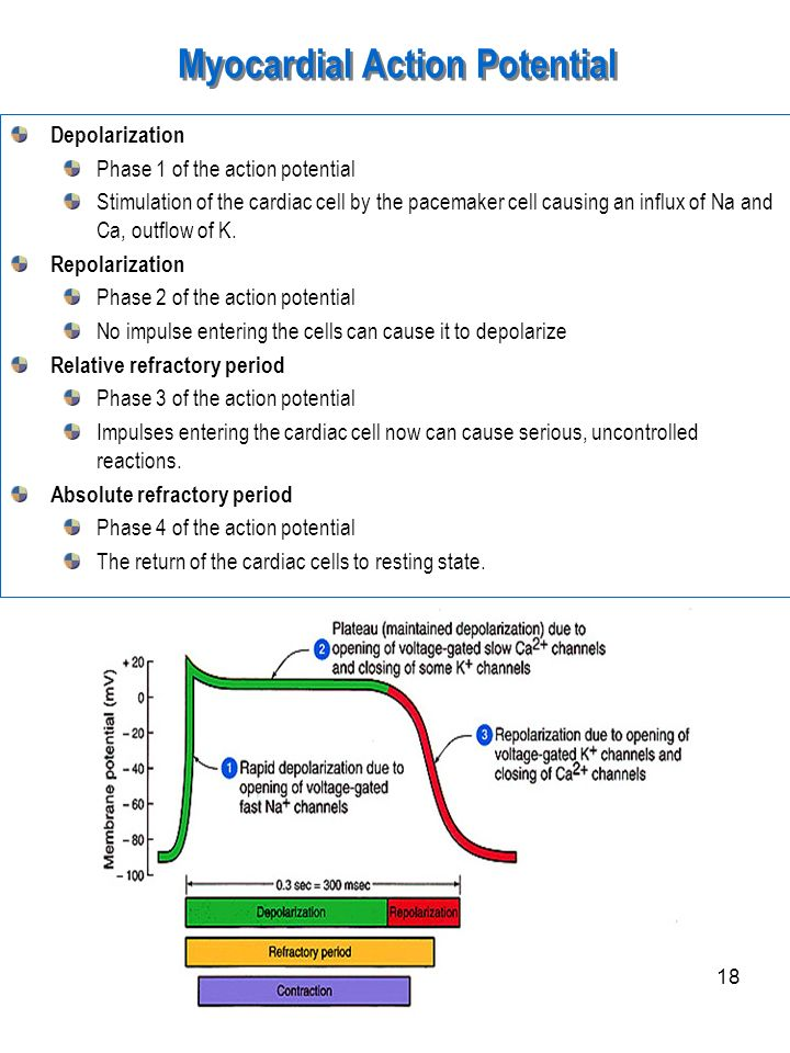 Myocardial Action Potential