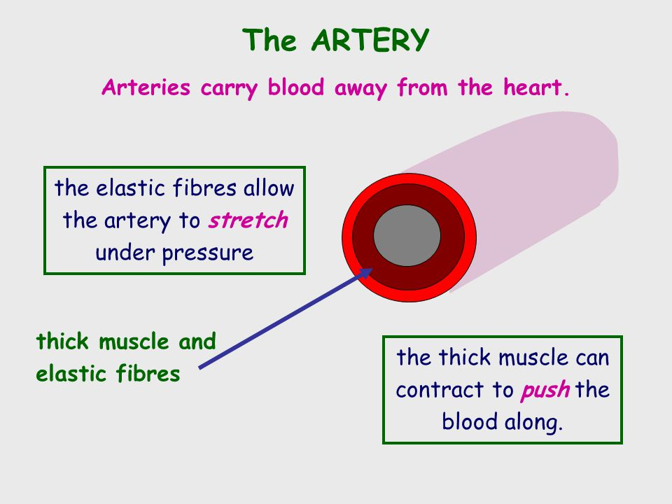 Arteries carry blood away from the heart.