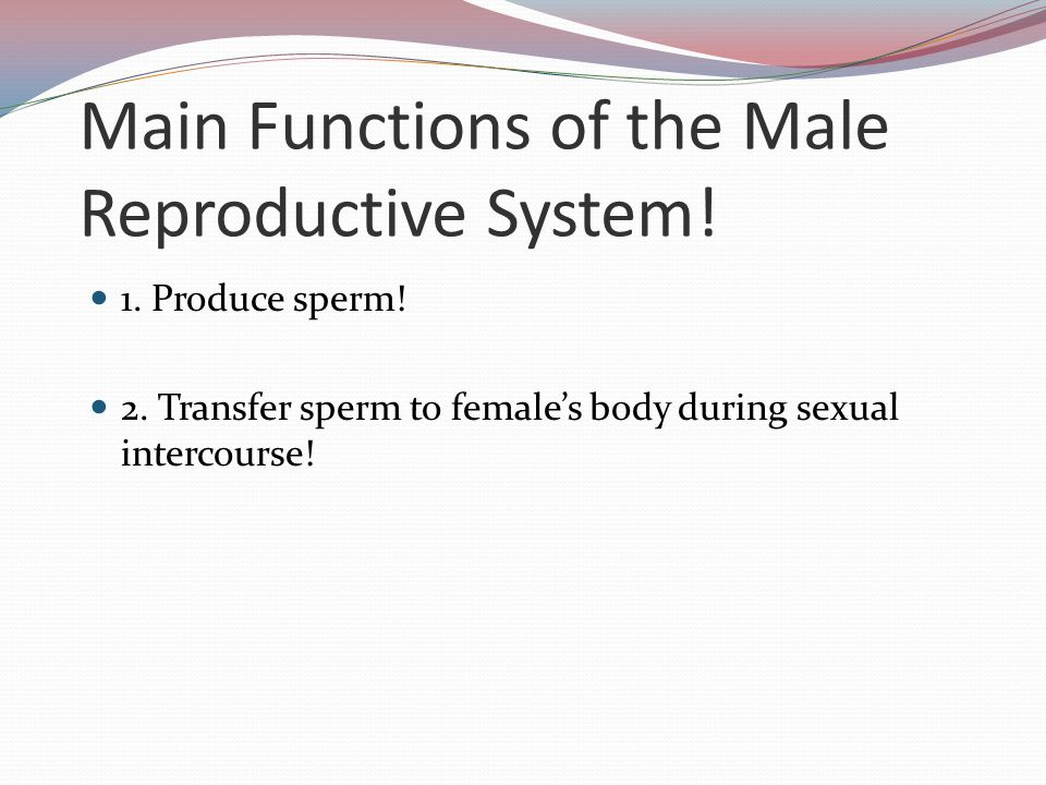 Main Functions of the Male Reproductive System!
