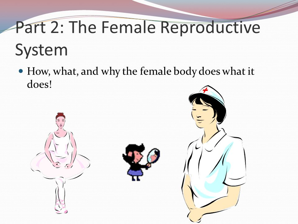 Part 2: The Female Reproductive System