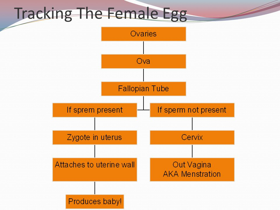Tracking The Female Egg