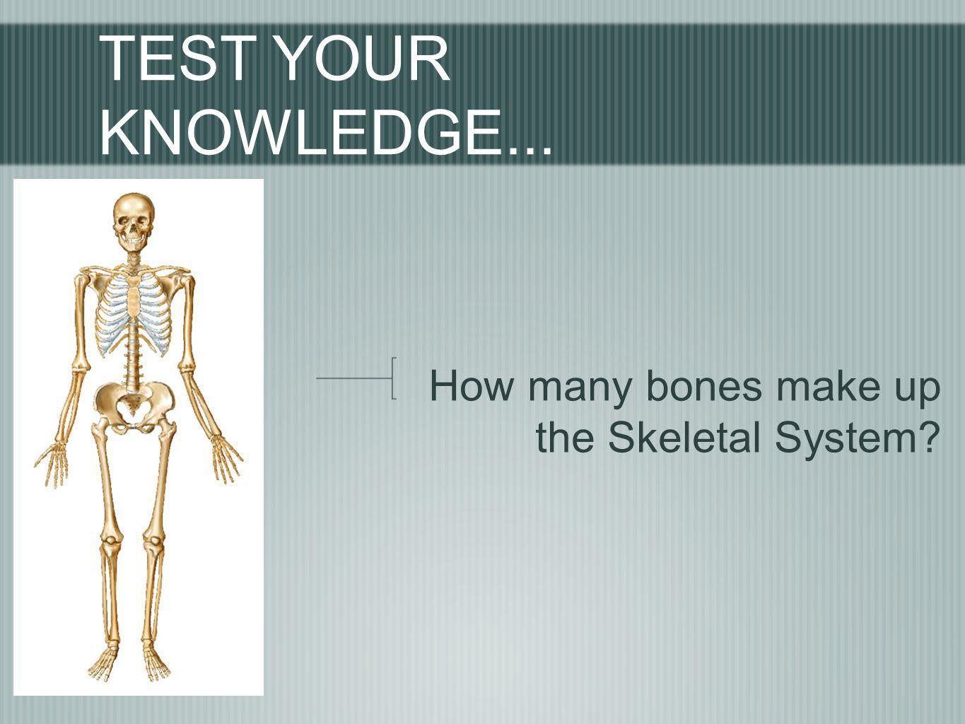TEST YOUR KNOWLEDGE... How many bones make up the Skeletal System