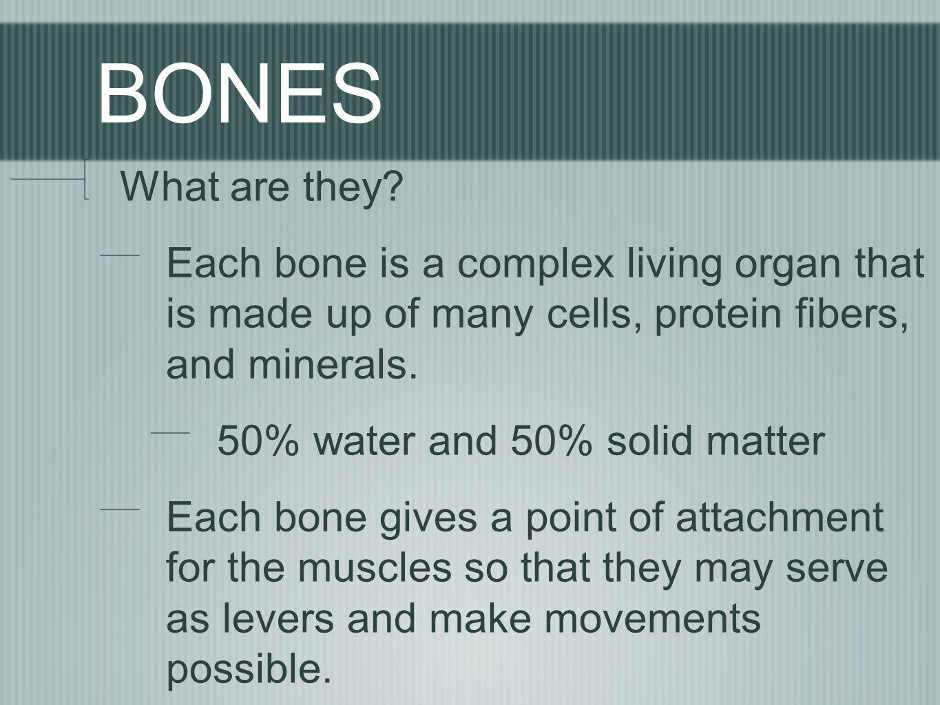 BONES What are they Each bone is a complex living organ that is made up of many cells, protein fibers, and minerals.