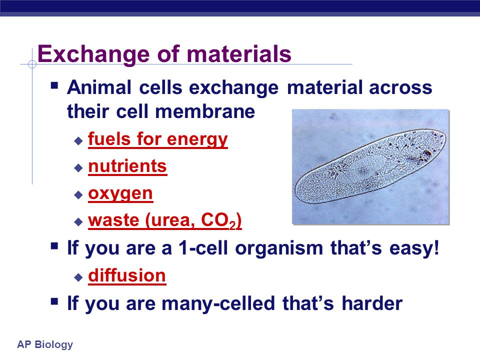 Exchange of materials Animal cells exchange material across their cell membrane. fuels for energy.