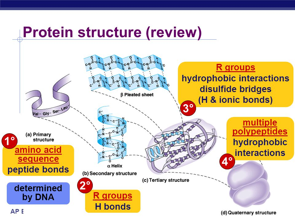 Protein structure (review)