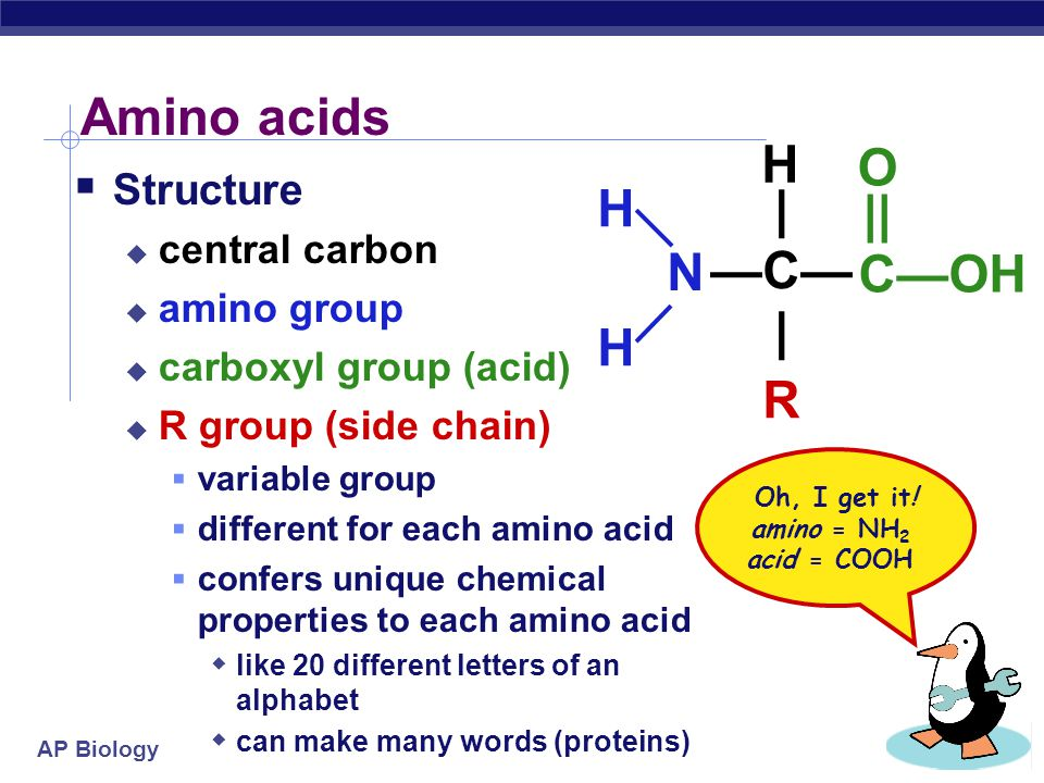 Amino acids H O | H || —C— C—OH —N— R Structure central carbon