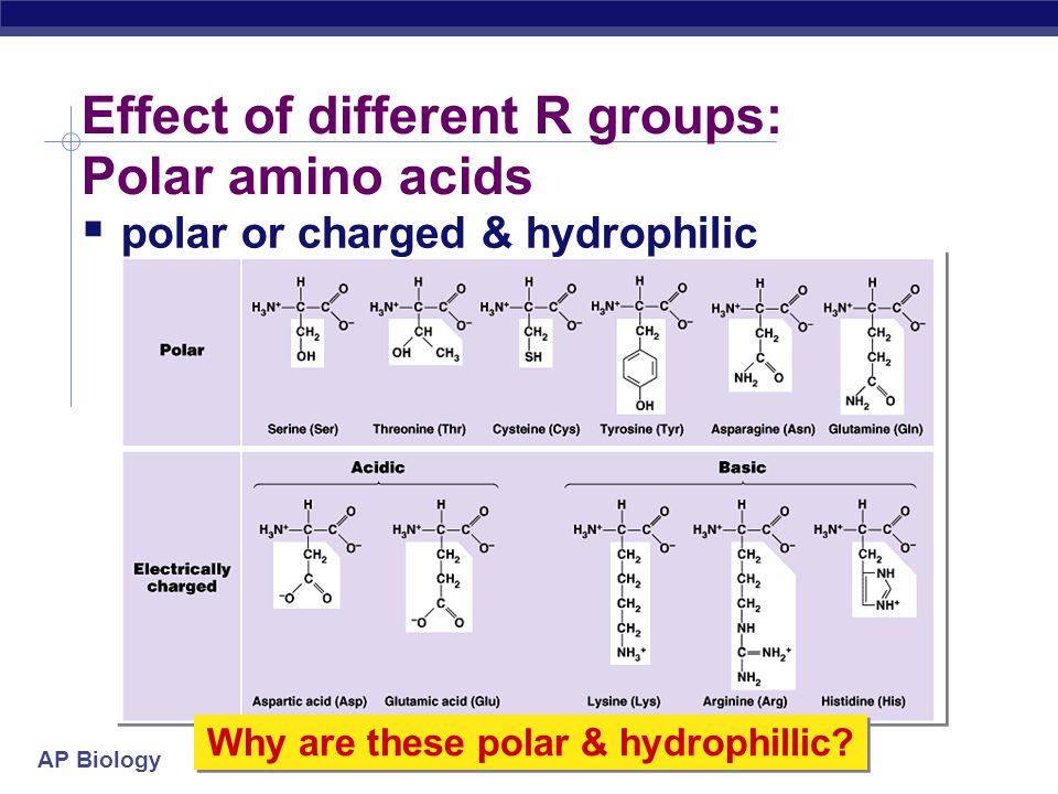 Effect of different R groups: Polar amino acids