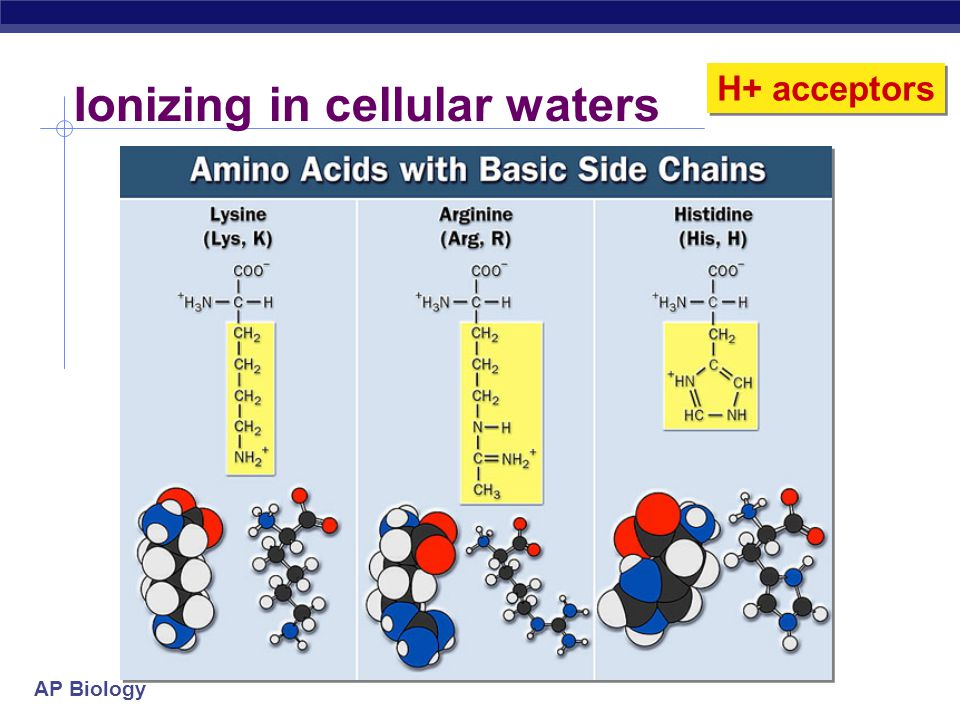 Ionizing in cellular waters