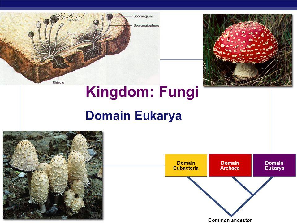 Kingdom: Fungi Domain Eukarya 2007-2008 Domain Eubacteria Archaea