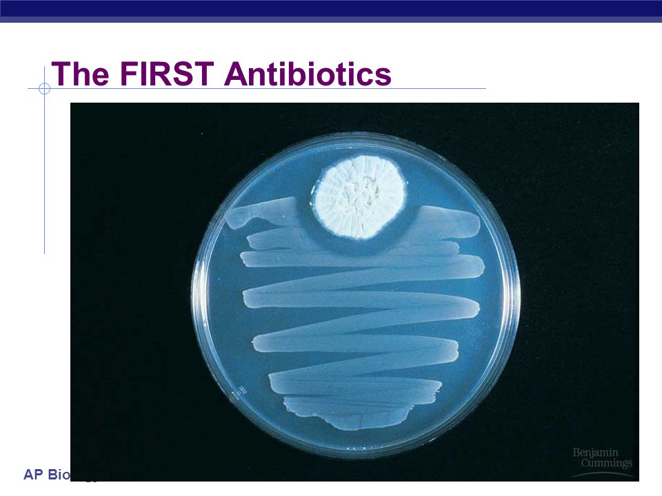 The FIRST Antibiotics