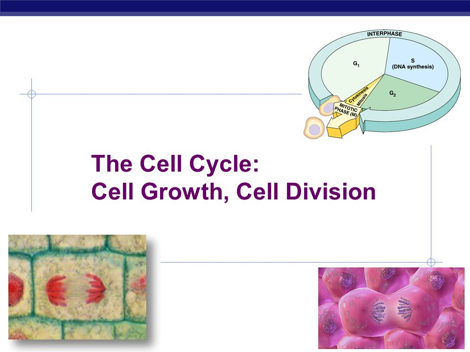 The Cell Cycle: Cell Growth, Cell Division
