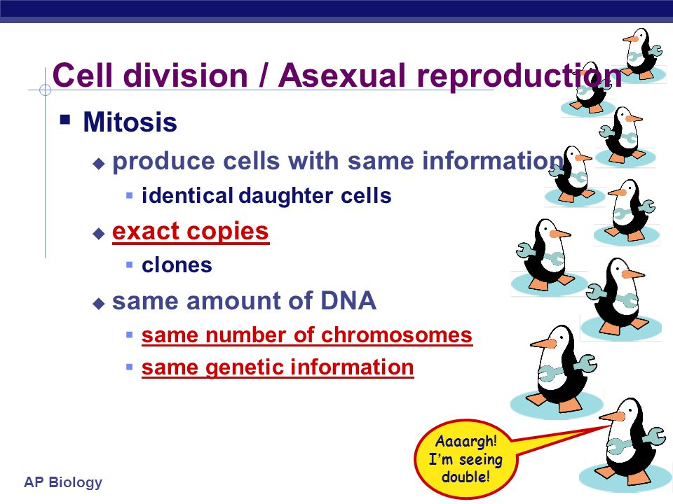 Cell division / Asexual reproduction