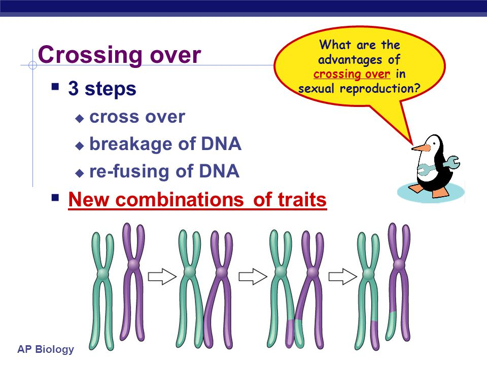 What are the advantages of crossing over in sexual reproduction