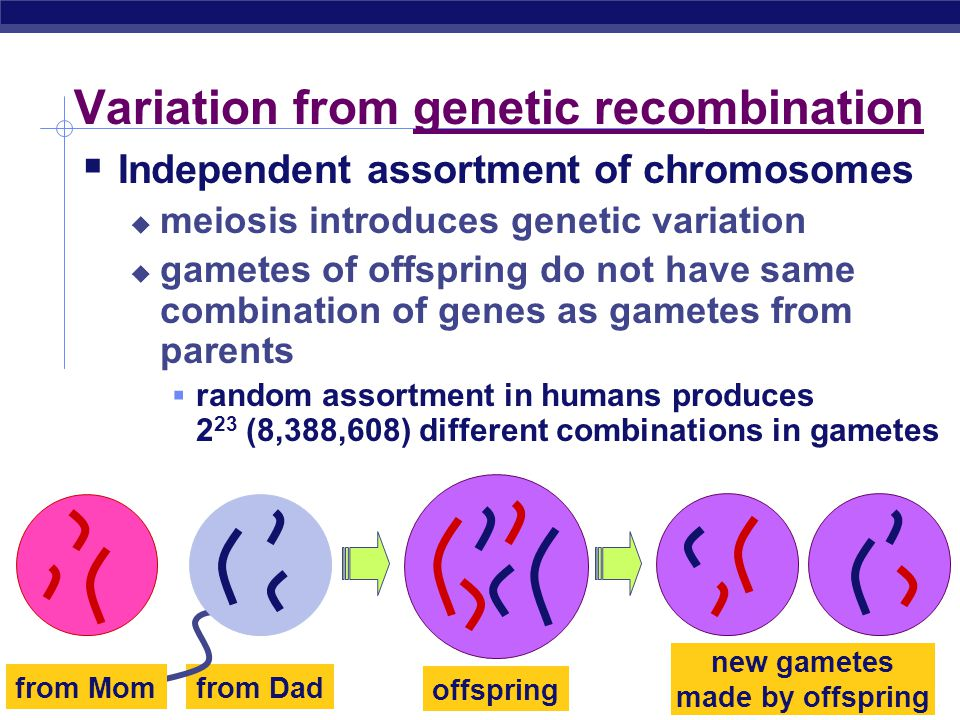Variation from genetic recombination