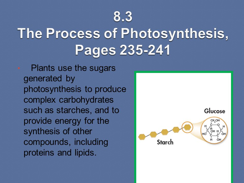 8.3 The Process of Photosynthesis, Pages 235-241