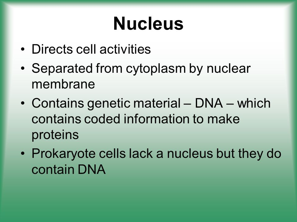 Nucleus Directs cell activities