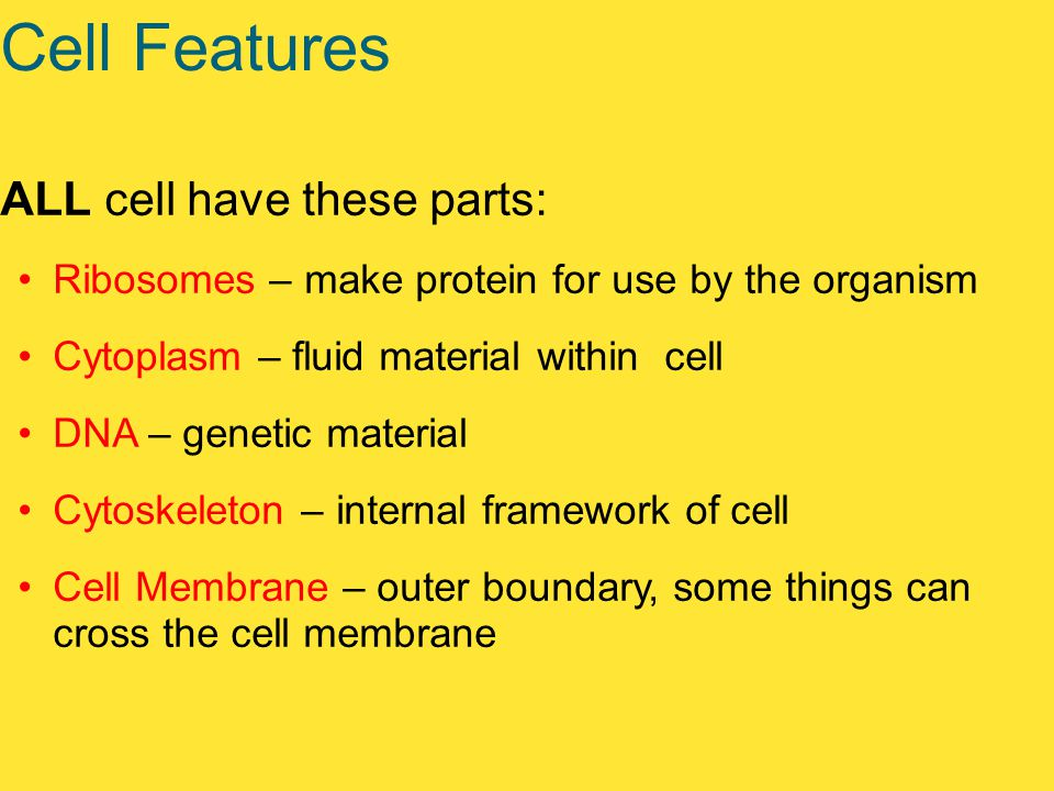Cell Features ALL cell have these parts: