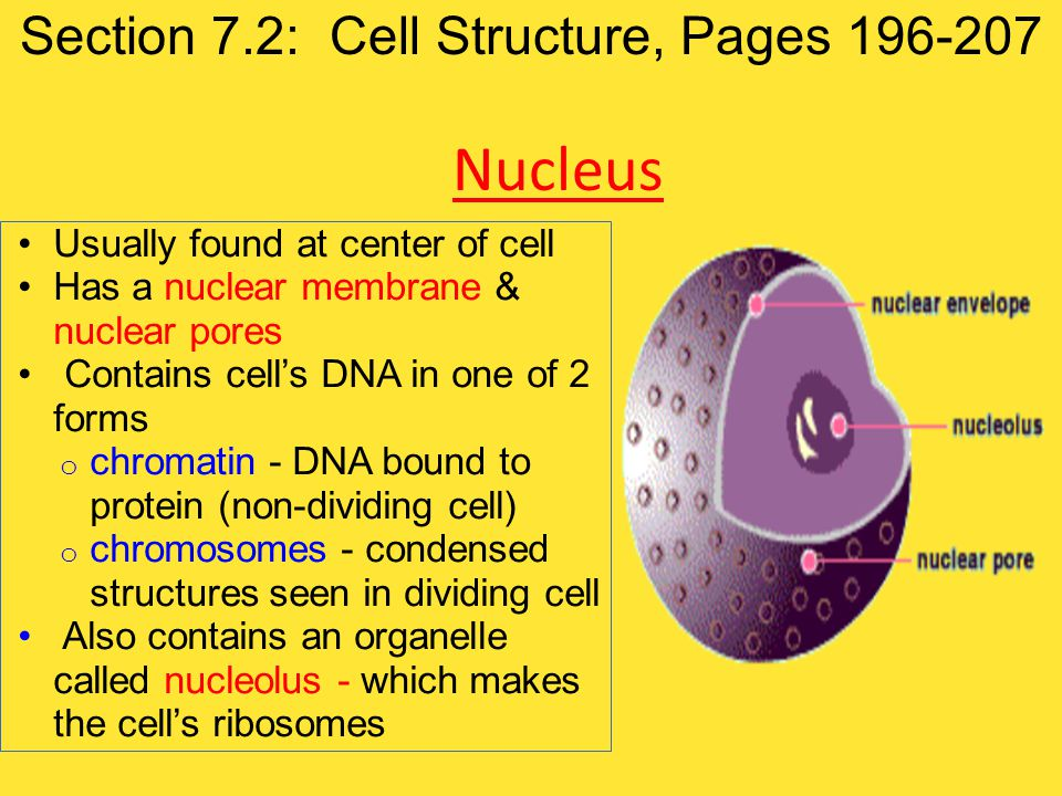 Section 7.2: Cell Structure, Pages 196-207
