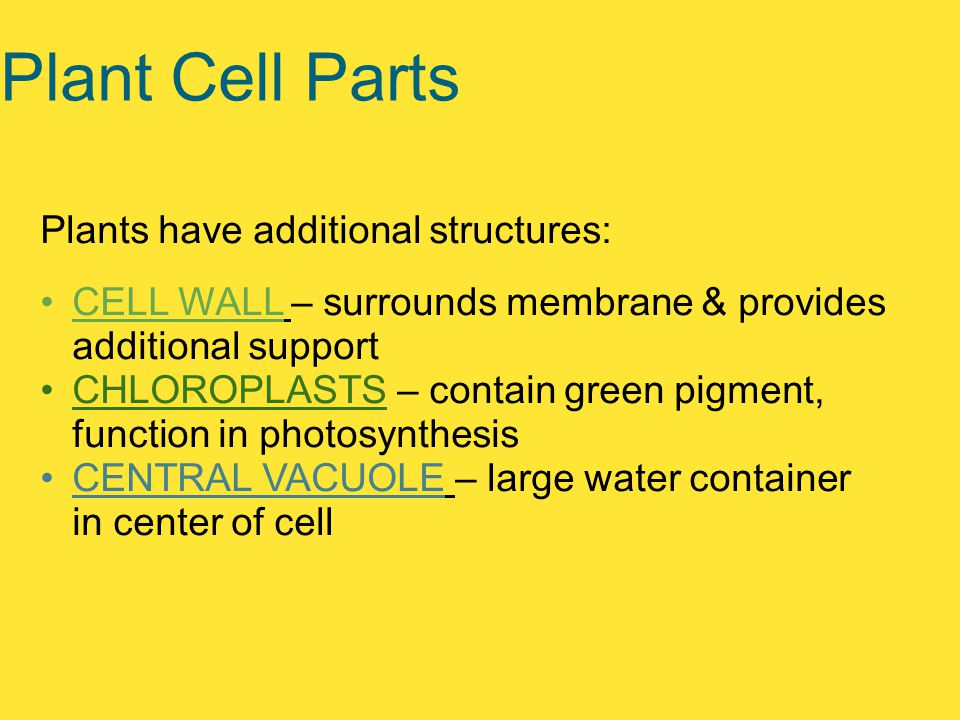 Plant Cell Parts Plants have additional structures: